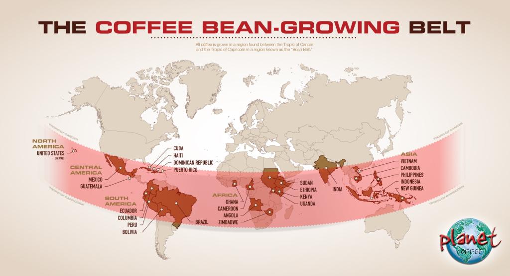 Coffee Bean Growing Belt Planet Coffee